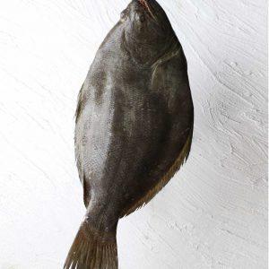 خرید ماهی کفشک