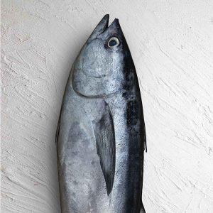خرید ماهی تن هوور