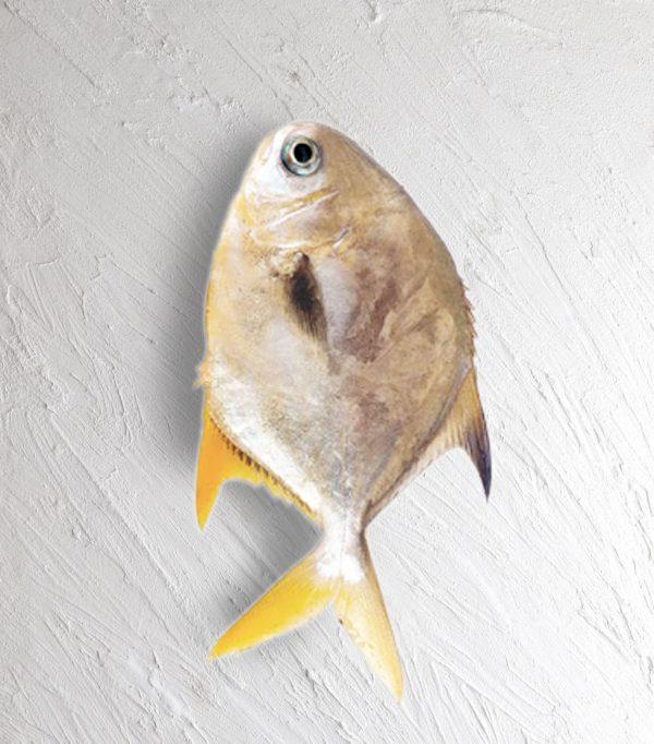پرستو ماهی