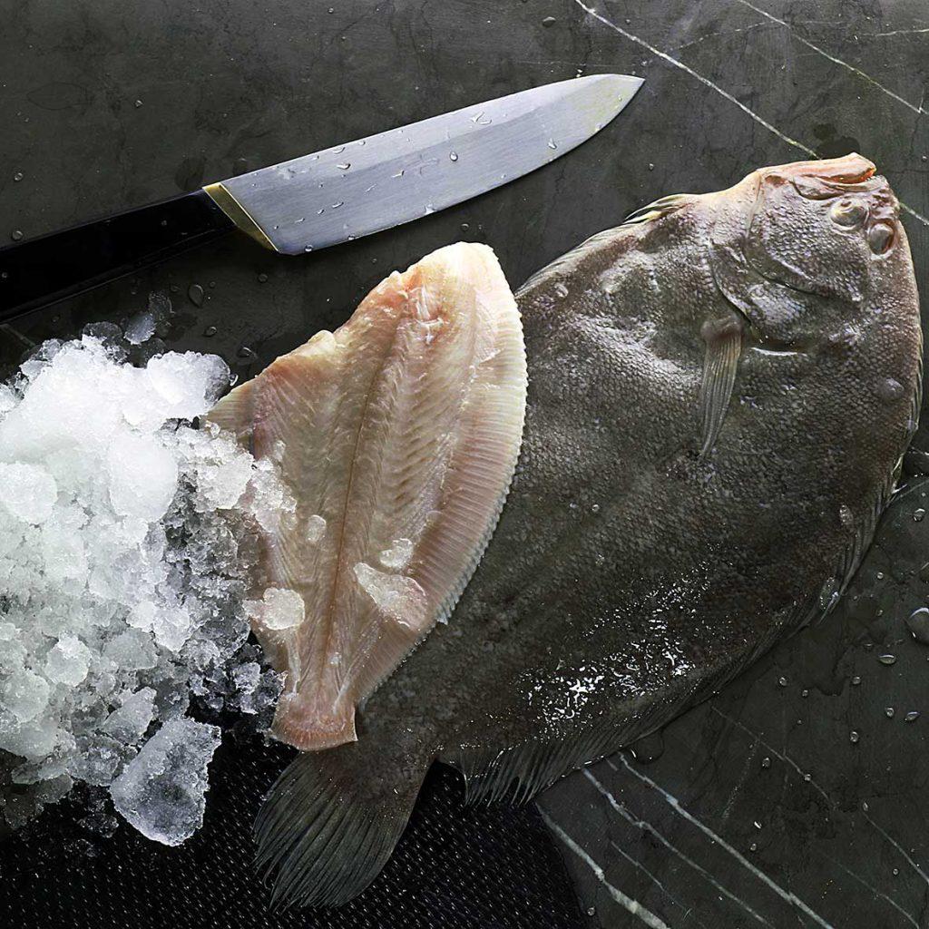 کفشک ماهیان ماهی مزلک