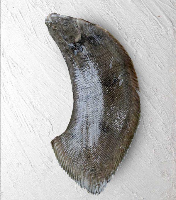 ماهی مزلک