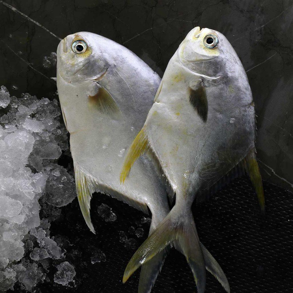 خرید ماهی پرستو