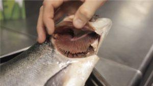ماهی تازه جنوب