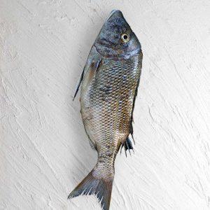 خرید ماهی شعری تازه جنوب