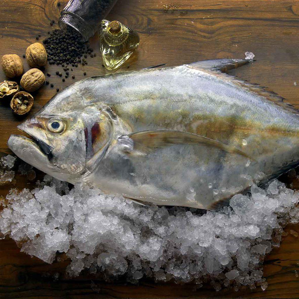 خرید ماهی مقوا عکس