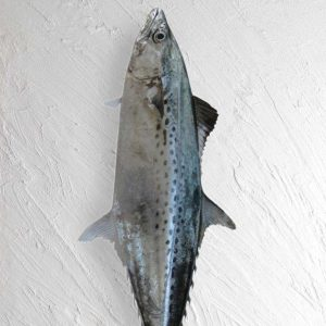 خرید ماهی قباد