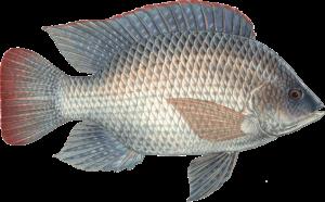 ماهی های ممنوعه