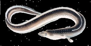 ماهی های مضر