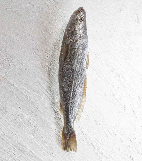 خرید ماهی شوریده