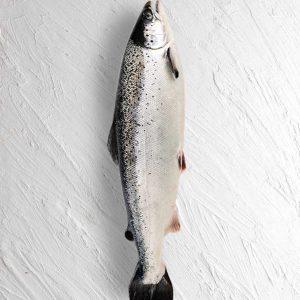 سالمون نروژی