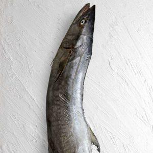 خرید ماهی شیر تازه جنوب