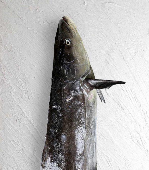 خرید ماهی سوکلا سکن لیان
