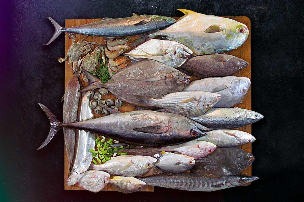 خرید ماهی جنوب و انواع ماهی جنوب