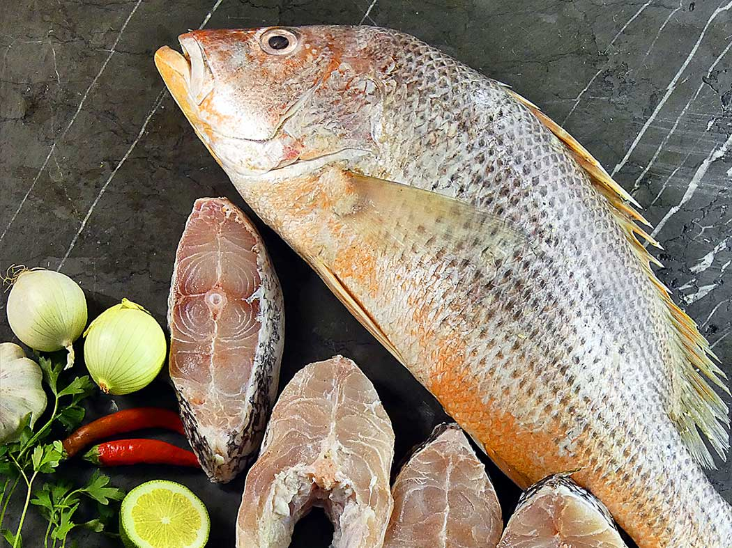 معرفی ماهی سرخو