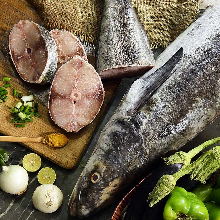 خرید ماهی سوکلا یا سکن