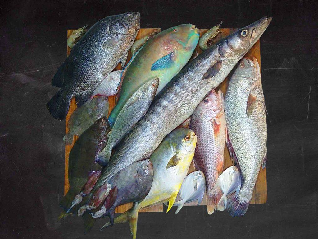 معرفی ماهی های جنوب