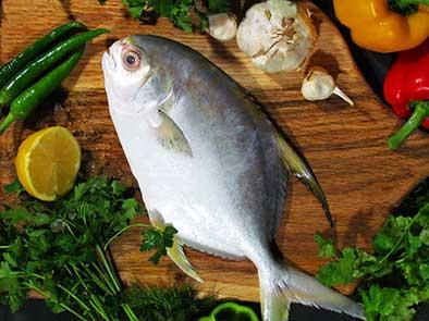 معرفی ماهی جنوب