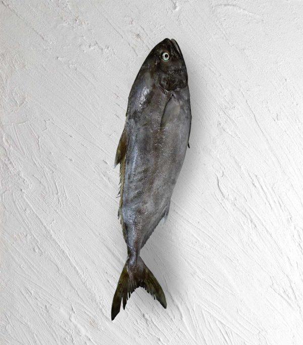 خرید ماهی حمام