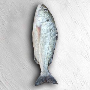 ماهی صبیتی