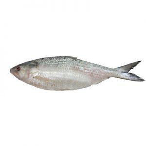 ماهی صبور